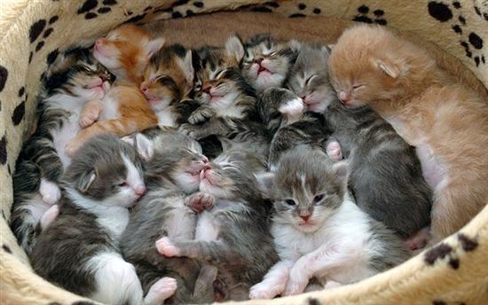 les chats!! 0e4c52f7
