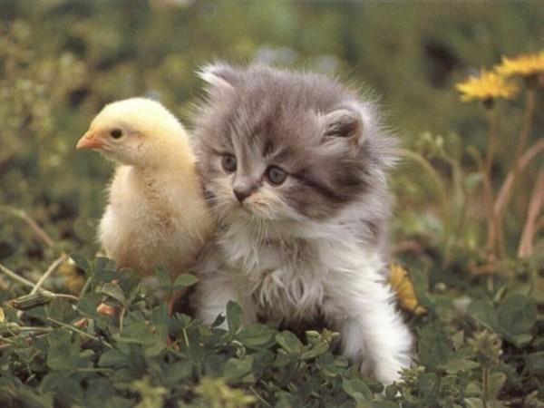 les chats!! 13c9aa4f
