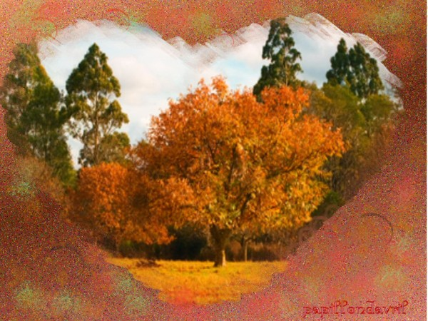fond automne