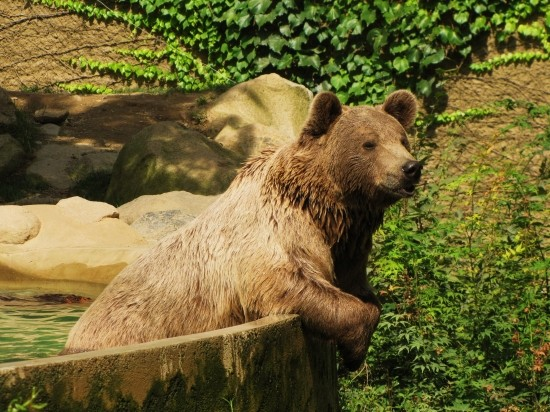 Les ours - Page 3 2c6f3942