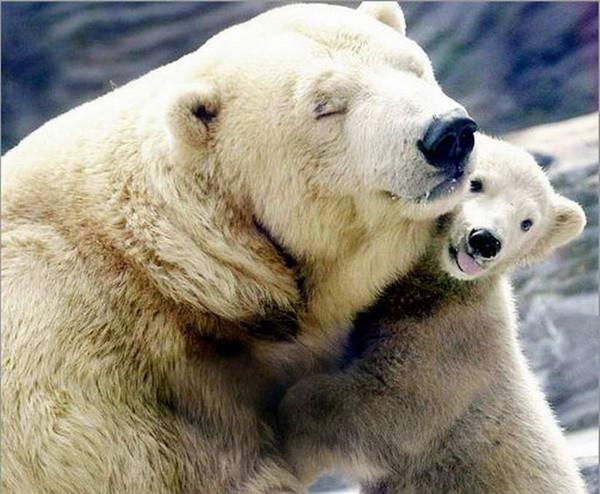 Les ours - Page 3 2d91724c