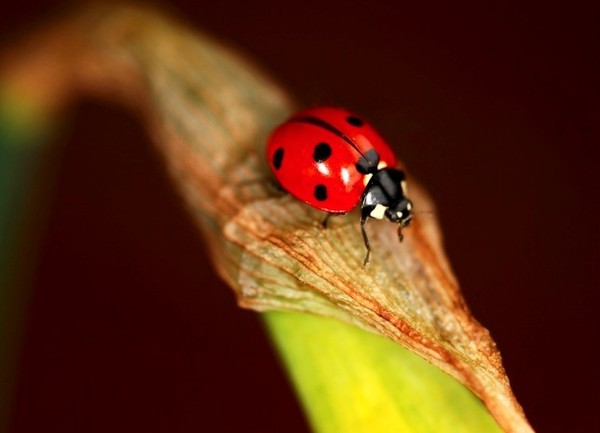 Coccinelle. 2dd341f7