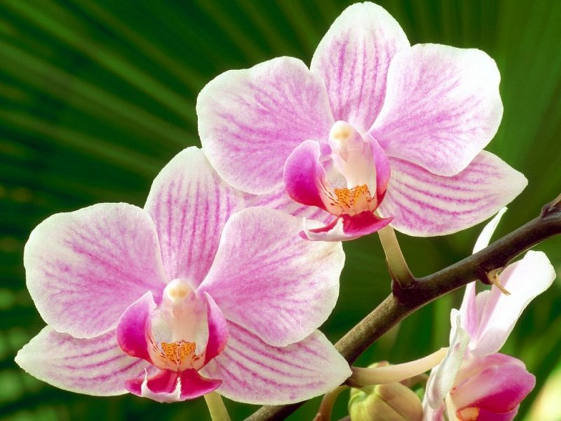 3-photos-orchidee-g.jpg