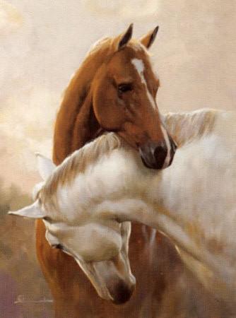 image de chevaux