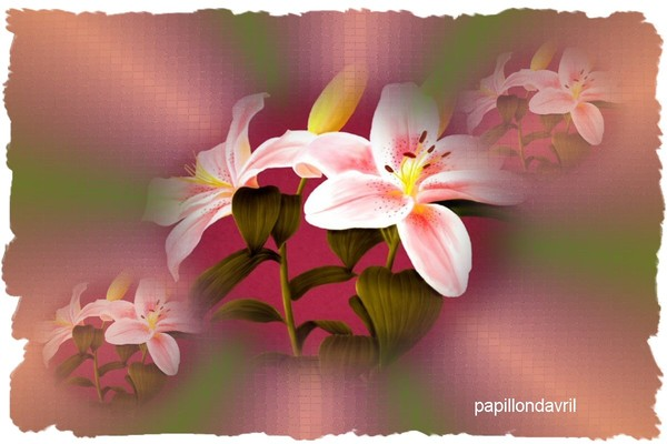 Carte cadeau printemps - Cado carte enseigne ...