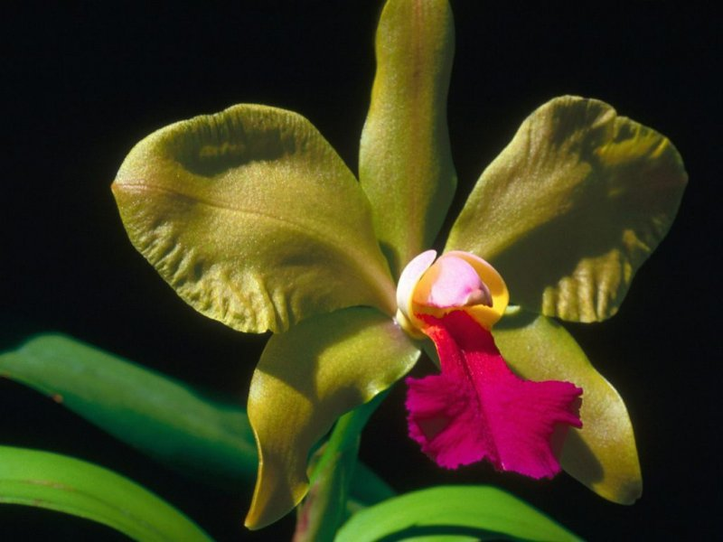 6-images-orchidee-g.jpg