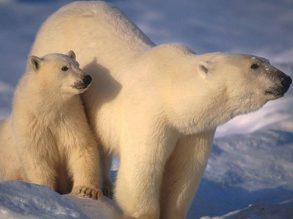 Les ours - Page 3 624b1293