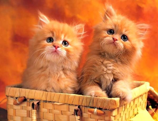 les chats!! 6421eb03