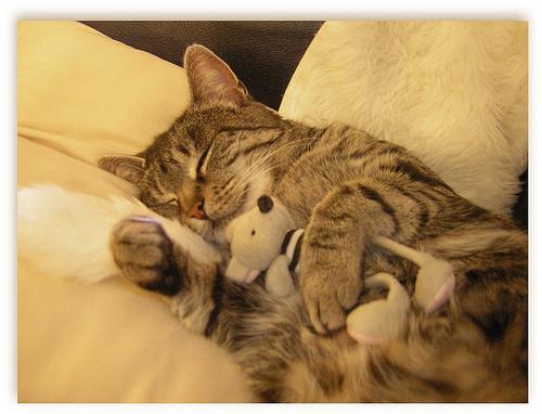 les chats!! 67a212f2