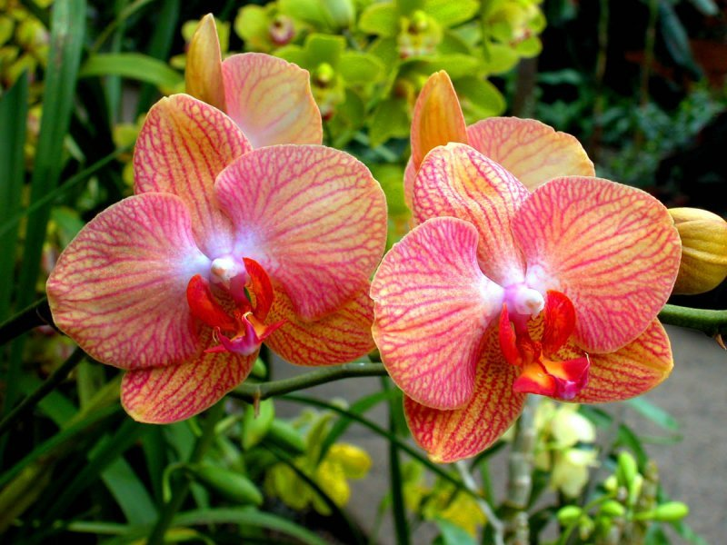 9-0-photos-orchidee-g.jpg