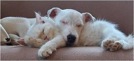 les chats!! - Page 2 9437a18b