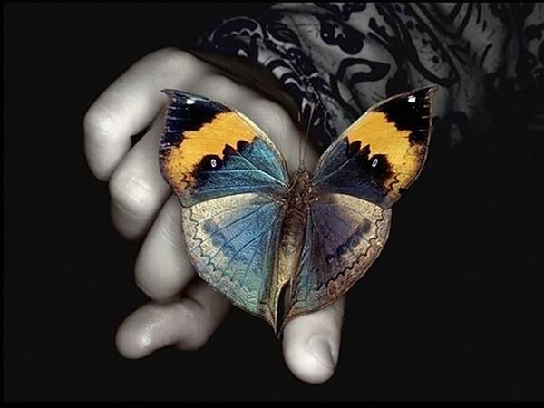 Стих о любви-мотылек