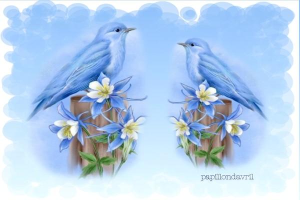 oiseaux fond ecran