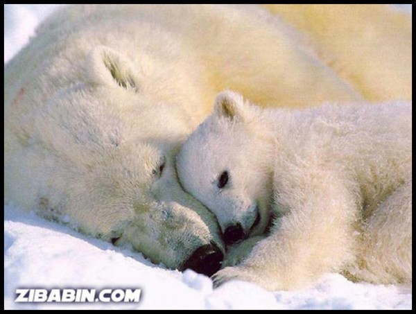 Les ours - Page 3 E2e4126f