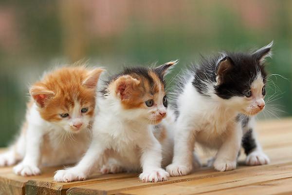 Les chats - Image de petit chat ...