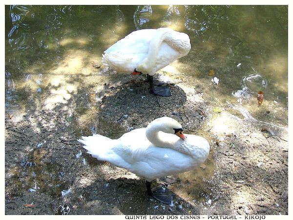 lac-des-cygnes-1.jpg