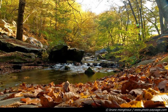 images automne