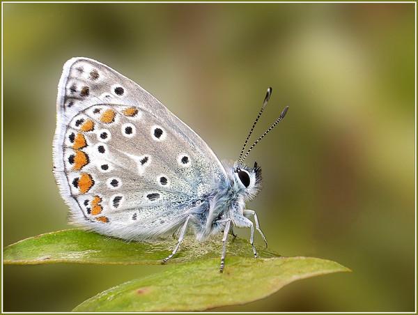Photo des papillons et des putes
